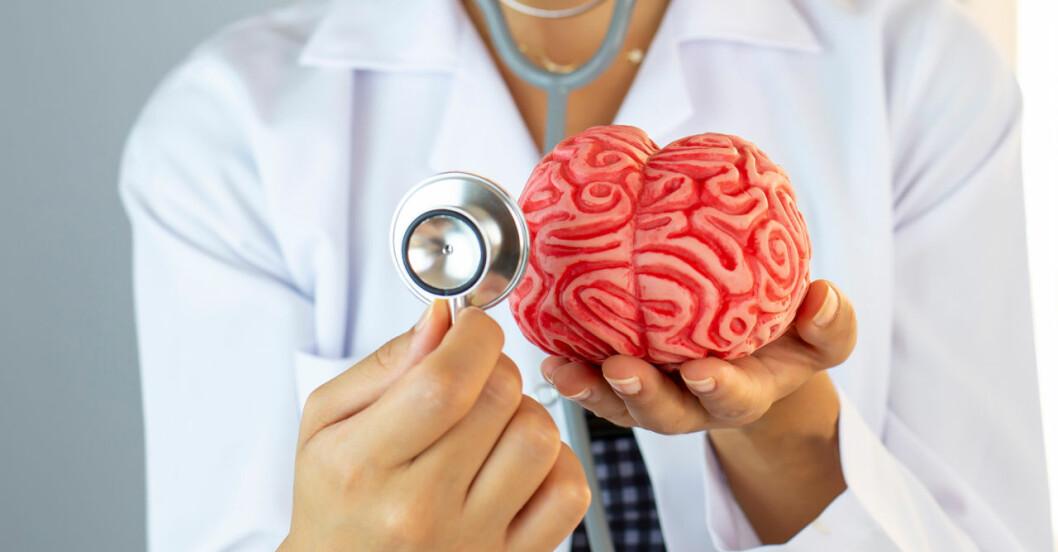 Läkare håller en modell av en hjärna i sina händer