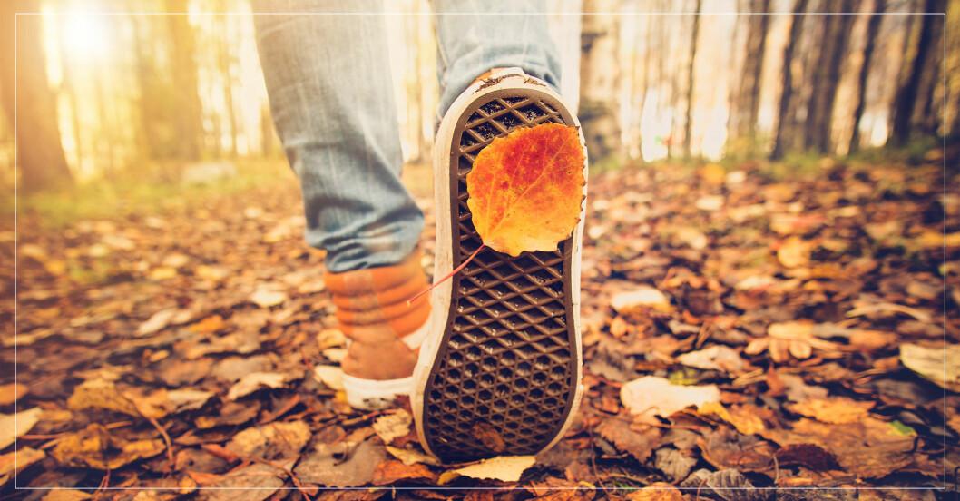 Kvinna går en kilometer i skogen