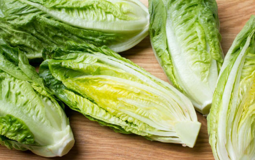 Återodla grönsaker. Romansallad går fint att återplantera.