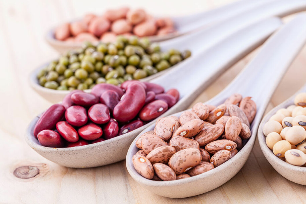 beans-protein-mabra