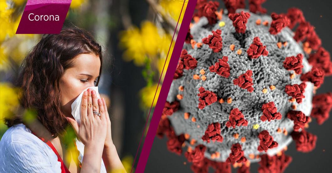 Kvinna drabbad av pollen, coronaviruset.