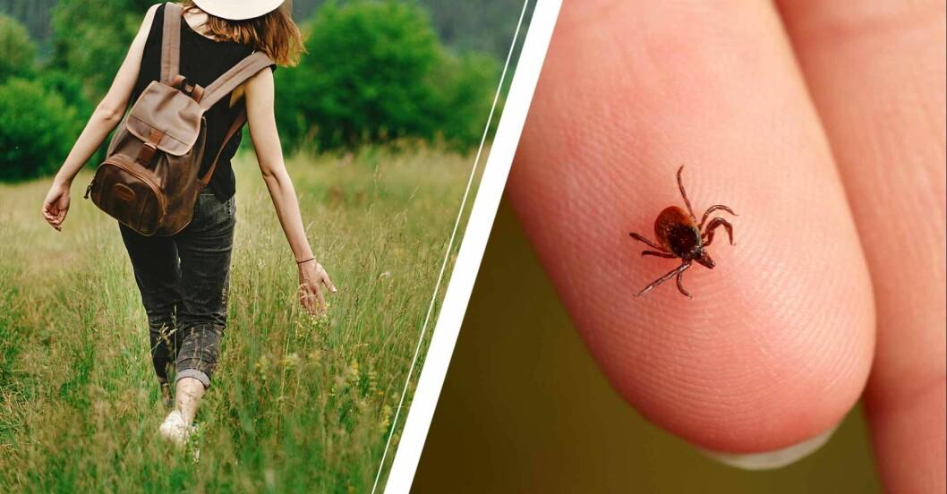 Kvinna som går i gräset och en fästing på någons finger