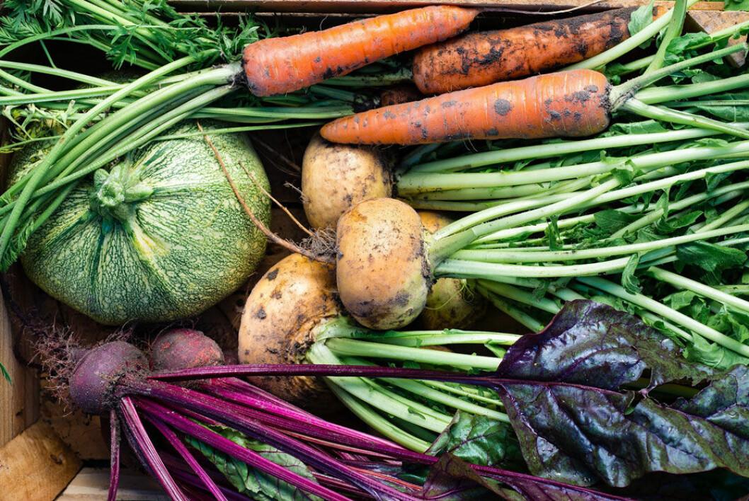 Rotfrukter –ett miljösmart sätt att äta mer grönsaker.