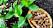Gurkmeja är en rot som också ger en meterhög växt