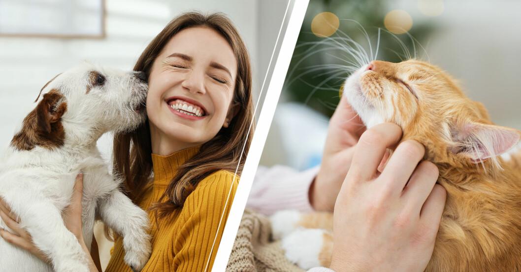 Hund slickar kvinna i ansiktet och katt njuter av att bli kliad.