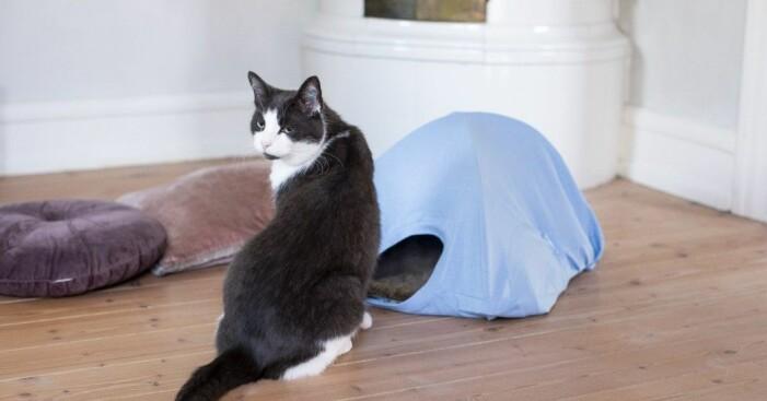 Katt med eget tält