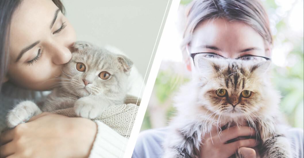 det säger din katt om din personlighet