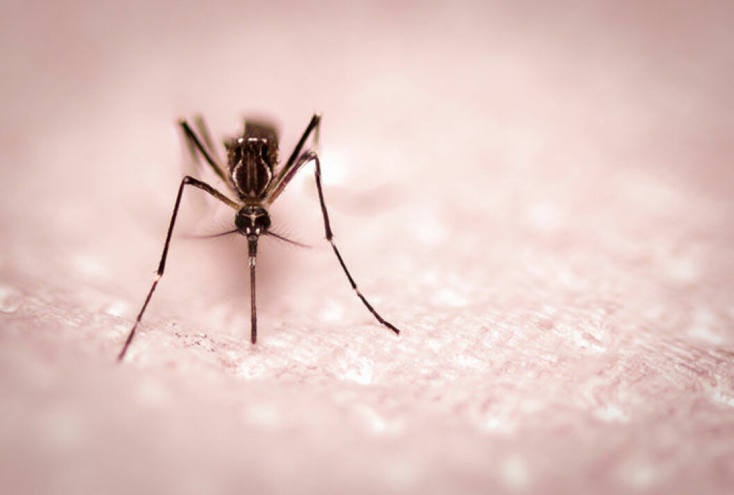 Mygg - därför bits de
