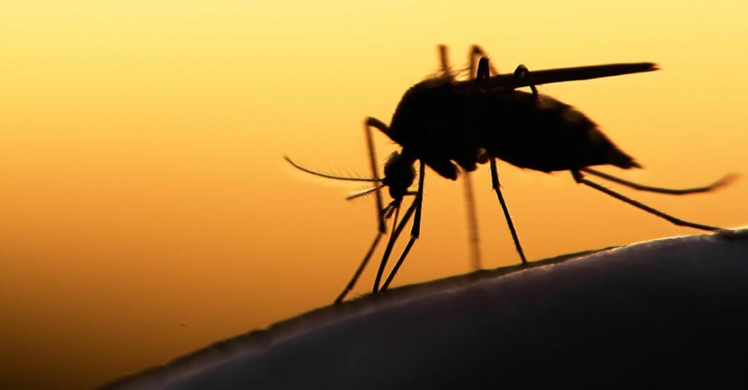 Slipp myggen hemma med en egen myggfälla!