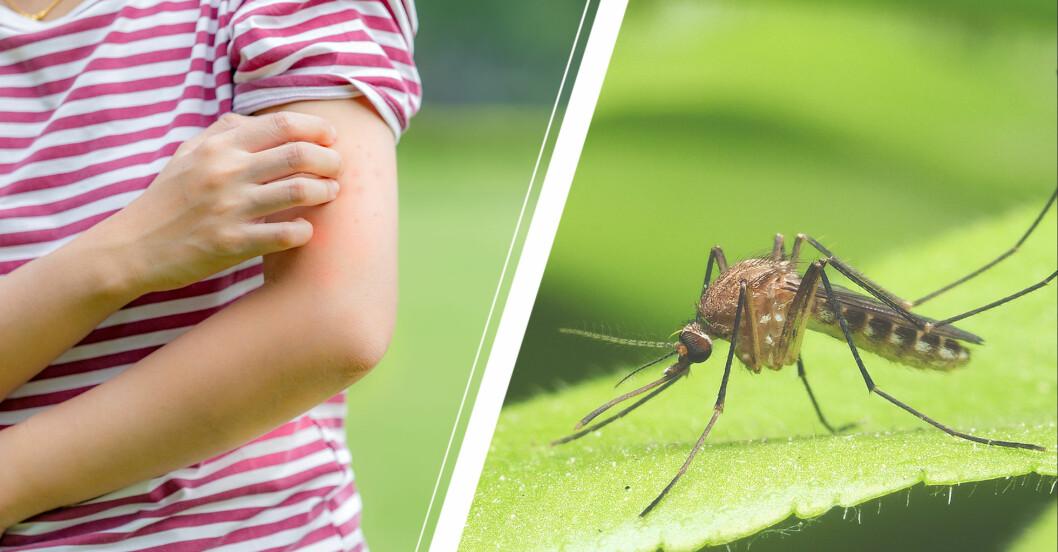 kvinna testar myggmedel som verkligen skyddar mot sådana här myggor