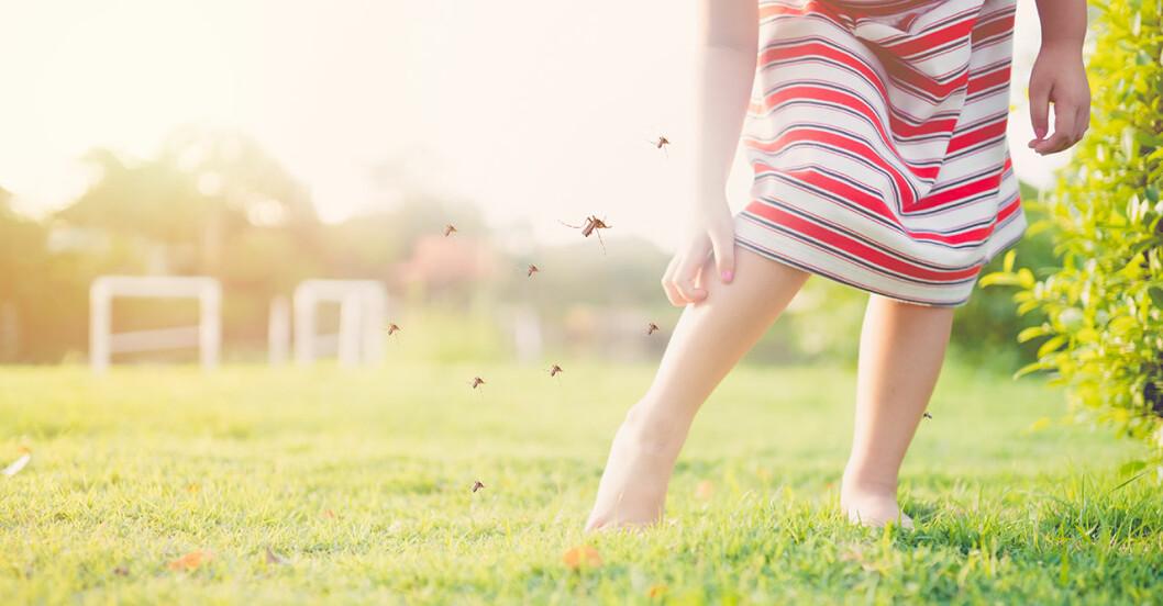 myggor anfaller en kvinnas ben