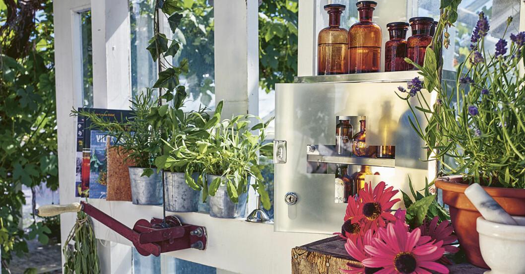 Ett växthus med läkeväxter