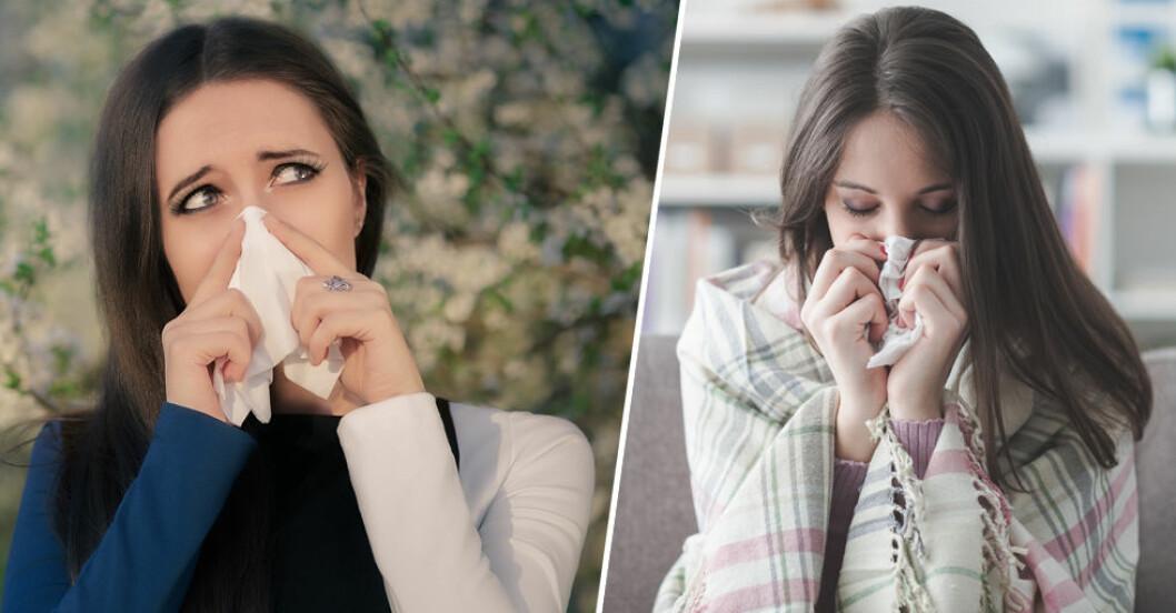 Allergisk mot pollen – eller bara förkyld? Så vet du skillnaden.