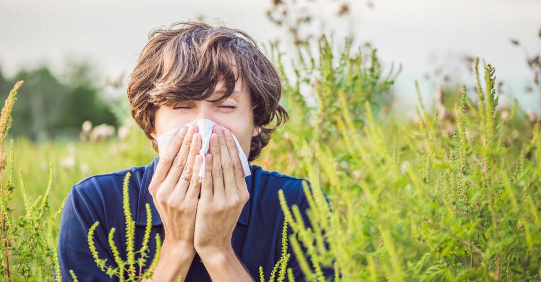 Bästa receptfria läkemedlen mot pollenallergi!