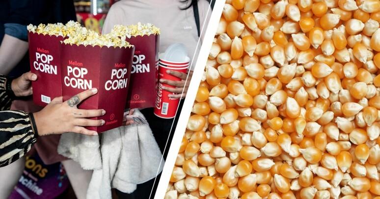 Bio popcorn och opoppade majskärnor