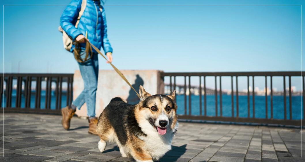 Kvinna ute och går med sin hund.