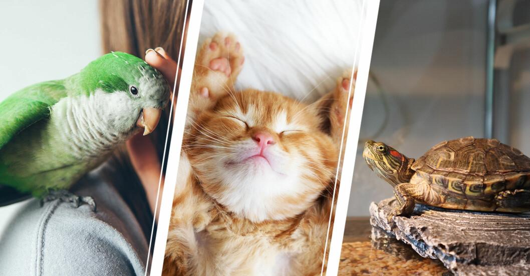 Quiz: vilket husdjur passar dig bäst