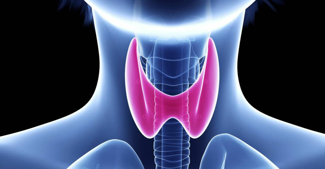 Sköldkörteln är hjärtformad och sitter i halsen.