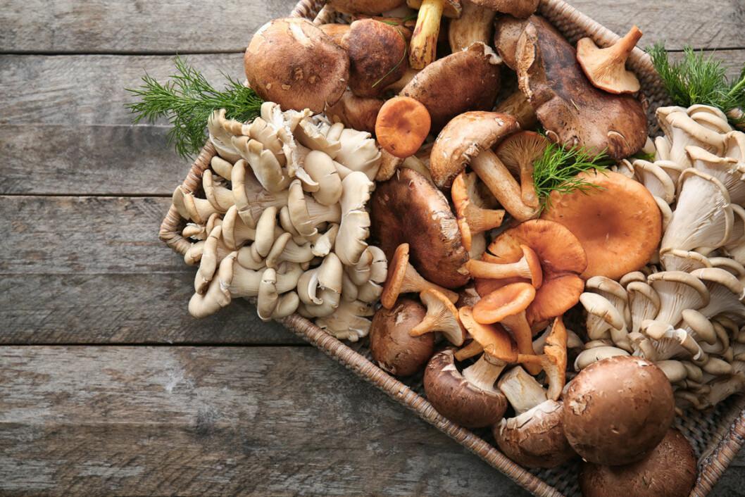 Ät helst svampen tillagad.