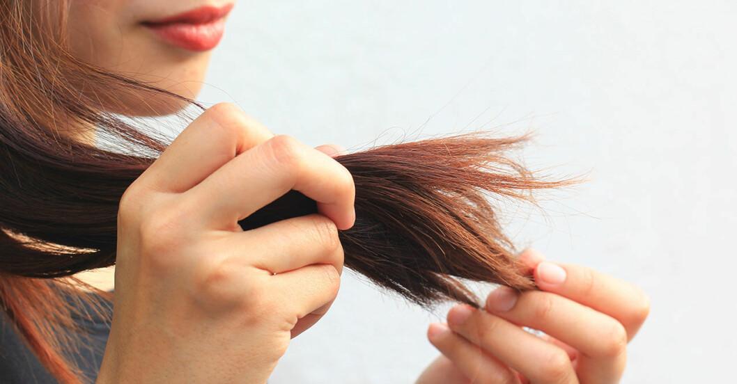 Kvinna med kluvna hårtoppar i ett torrt hår