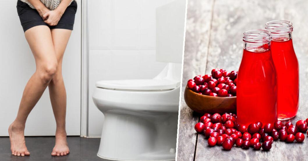 Tranbär mot urinvägsinfektioner?