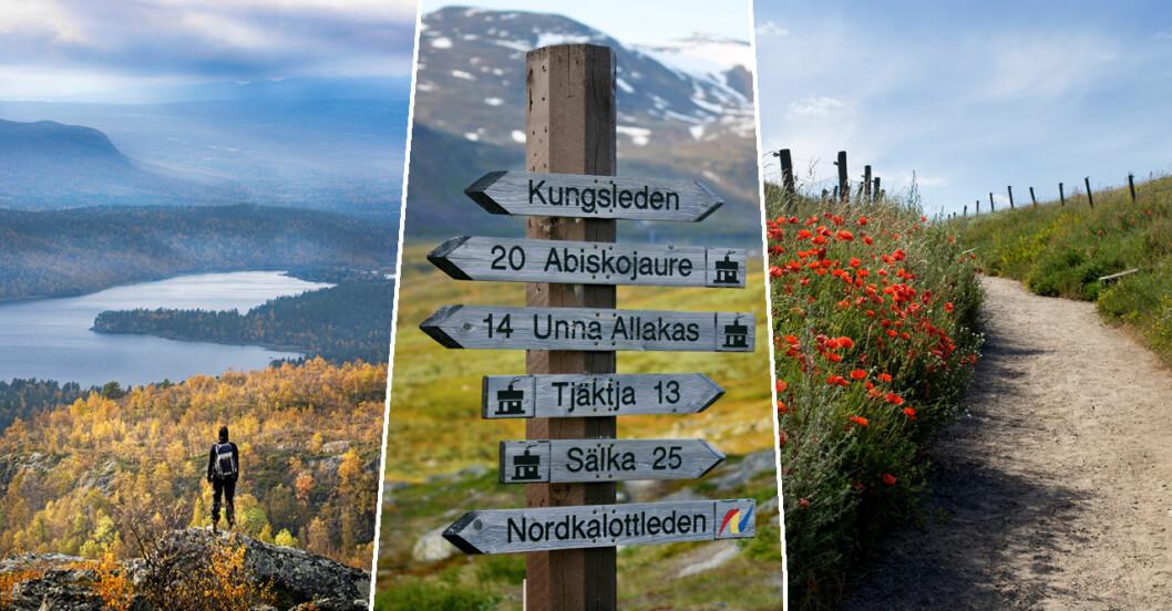12 signaturleder i Sverige.