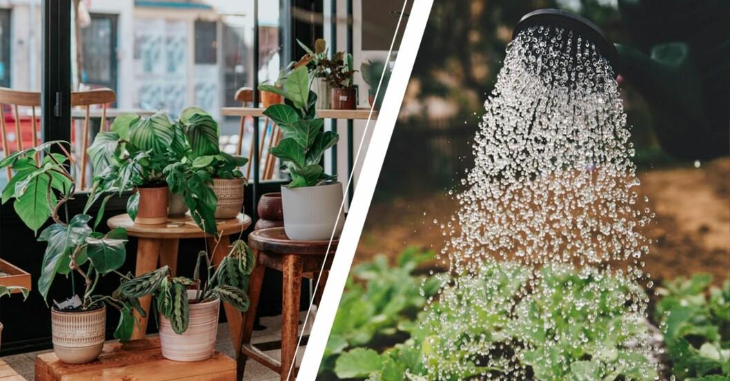 blomkrukor inne och trädgård som vattnas utomhus